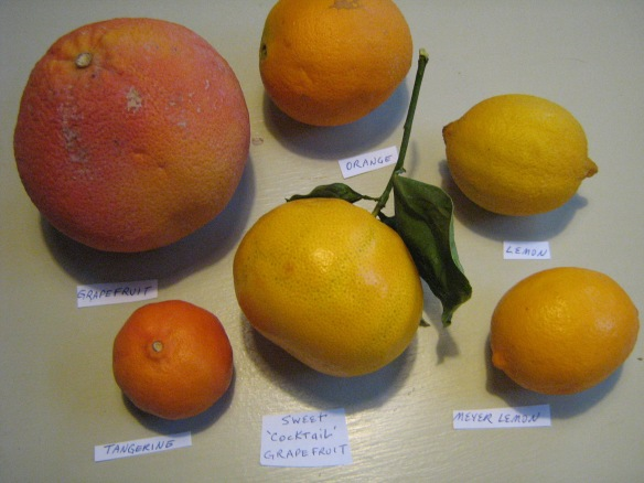 some of the citrus we have preserved